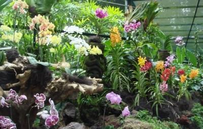 Vườn bách thảo Singapore với loài hoa lan-biểu tượng của đảo quốc này