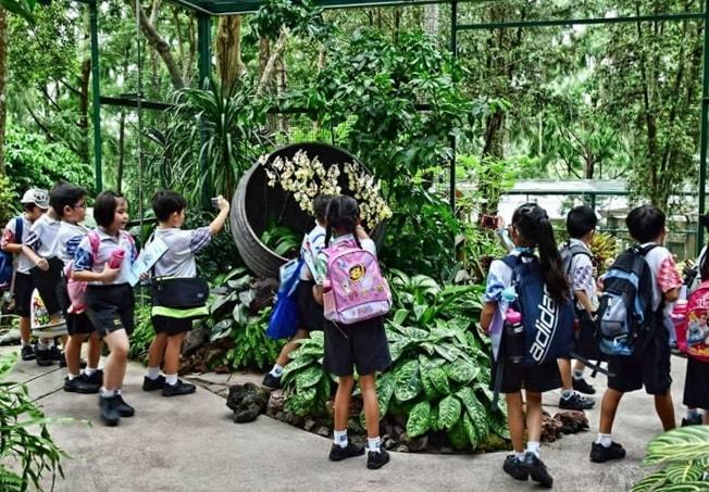 Vườn bách thảo Singapore nơi tuyệt vời cho con trẻ khám phá thiên nhiên